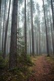 Kiefernwald am frühen Morgen lizenzfreie stockbilder