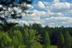Kiefernwald mit blauem Himmel und Wolken Lizenzfreies Stockfoto