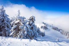 Kiefernwald- und -skisteigungen umfasst im Schnee auf Wintersaison Stockbilder