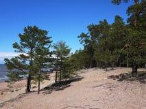 Kiefernwald und -strand K?ste des Finnischen Meerbusens auf der Nordseek?ste stockbild
