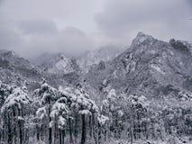 Kiefernwald unter dem Schnee und große Berge auf dem Hintergrund Stockfoto