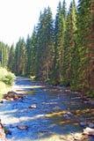 Kieferschatten auf ruhigem Fluss Stockbild