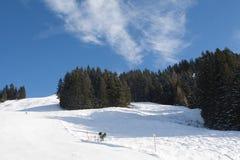 Kieferwald auf dem Hügel Lizenzfreie Stockfotografie