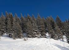 Kieferwald auf dem Hügel Lizenzfreie Stockfotos