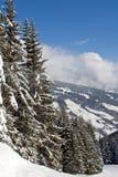 Kieferwald auf dem Hügel Stockbild
