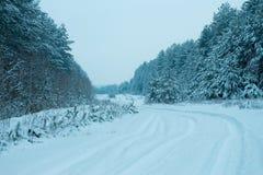 Kieferwald im Winter Stockbilder