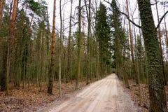 Kieferwald mit Straße Stockbilder