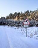 Kieferwald mit Tieren Lizenzfreies Stockbild