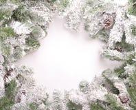 Kieferzweige mit Schnee stockfotografie