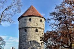 Kiek in de kök a Tallinn Immagini Stock