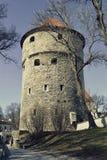 Kiek en de Kök une tour d'artillerie à Tallinn, Estonie Photos stock