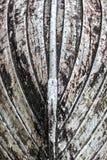Kiel eines hölzernen Bootes Stockbild