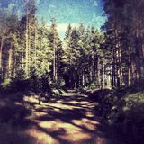 Kielder森林 免版税库存图片