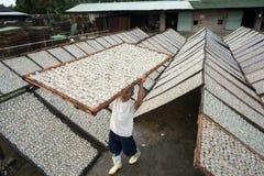 Kien Giang,越南- 2016年12月6日:Yellowstripe大量鱼烘干在湄公河三角洲的室外下面阳光,在越南南部 免版税库存图片