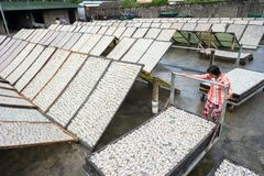 Kien Giang,越南- 2016年12月6日:Yellowstripe大量鱼烘干在湄公河三角洲的室外下面阳光,在越南南部 免版税库存照片