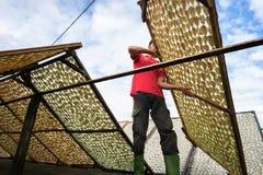 Kien Giang,越南- 2016年12月6日:Yellowstripe大量鱼烘干在湄公河三角洲的室外下面阳光,在越南南部 库存图片