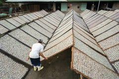 Kien Giang,越南- 2016年12月6日:Yellowstripe大量鱼烘干在湄公河三角洲的室外下面阳光,在越南南部 图库摄影