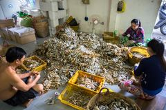 Kien Giang, Βιετνάμ - 6 Δεκεμβρίου 2016: Το Yellowstripe scad αλιεύει τη χειρωνακτική γραμμή παραγωγής στην πόλη της Rach Gia, Ki Στοκ Εικόνα