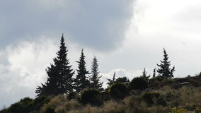 Kierdel barani pasanie w górze przy zmierzchem zbiory