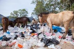 Kierdel dziki koń i pastic śmieci w naturalnym polu Obrazy Stock