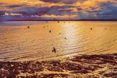 Kierdel gołębie lata nad kanapką i Pegwell zatoką w Ramsgate, Kent, UK przy zmierzchem w czasie odpływu morza gdy morze pluskocze zdjęcie stock