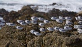 Kierdel mały ptaków odpoczywać Zdjęcie Royalty Free