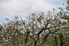 Kierdel otwarta wystawiająca rachunek bocianowa ptasia żerdź przy drzewem na niebieskim niebie i bielu obłocznym tle obrazy stock