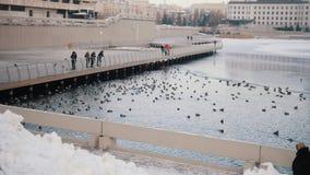 Kierdel pływa w jeziorze kaczki Ludzie ogląda one zbiory