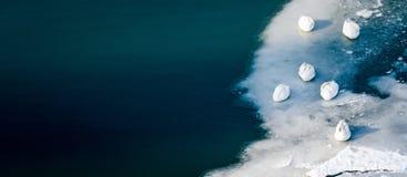Kierdel piękni biali niemi łabędź śpi na lodzie piękna turkusowa rzeka lub jezioro, bezpłatni zwierzęta w natury pojęciu zdjęcia stock