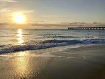 kierdel ptaka świt na plaży fotografia royalty free