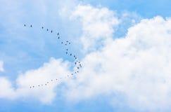 Kierdel ptaki migrujący, natury zwierzęcia tło Obrazy Royalty Free