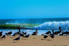 Kierdel ptaki odpoczywa przed rozbijać fala Zdjęcie Royalty Free