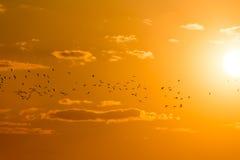 Kierdel ptaki przy świtem słońce Obrazy Stock