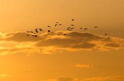 Kierdel ptaki przy świtem słońce Obrazy Royalty Free
