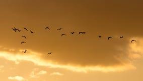 Kierdel ptaki przy świtem słońce Obraz Royalty Free