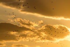 Kierdel ptaki przy zmierzchem Fotografia Stock