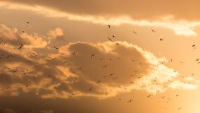 Kierdel ptaki przy zmierzchem Zdjęcie Royalty Free