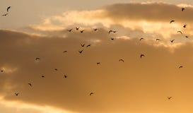Kierdel ptaki przy zmierzchem Zdjęcie Stock