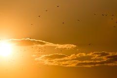 Kierdel ptaki przy zmierzchem Fotografia Royalty Free
