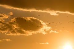 Kierdel ptaki przy zmierzchem Obraz Stock