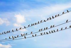 Kierdel ptaki target817_1_ na drutach Fotografia Royalty Free