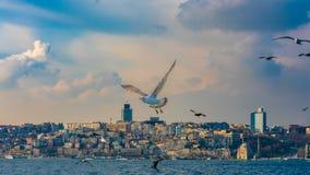 Kierdel Seagull Ptasi latanie Nad Dennym widokiem fotografia stock