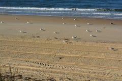 Kierdel seagulls Fotografia Royalty Free