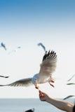 Kierdel seagulls lata 8 Zdjęcia Royalty Free