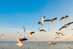 Kierdel seagulls lata 3 Obrazy Royalty Free
