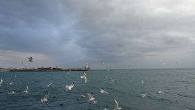 Kierdel seagulls lata nad morze zbiory