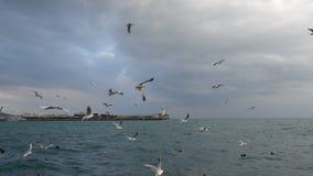 Kierdel seagulls lata nad morze zbiory wideo