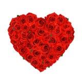kierowe róże Obrazy Stock