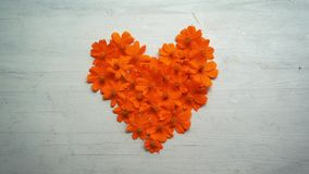 Kierowego kształta kosmosu pomarańczowy kwiat zdjęcie wideo