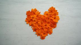 Kierowego kszta?ta kosmosu pomara?czowy kwiat zdjęcie wideo